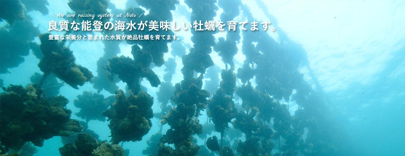能登牡蠣を養殖している【能登風土】 | 良質な能登の海水が美味しいかきを育てます